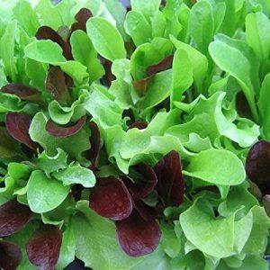 Dirt Goddess Super Seeds Organic Seed 1 Bulk Organic Mesclun Mix Seeds (1 LB) 425,000 Seeds