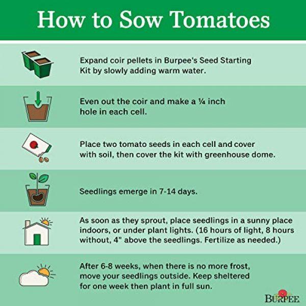 Burpee Organic Seed 4 Burpee 'Green Zebra' Organic | Green Slicing Tomato | 30 Seeds