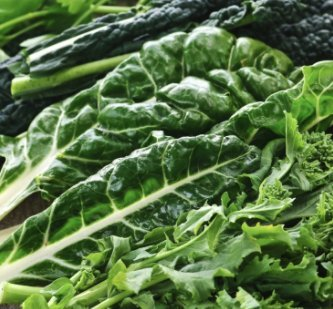 Rich Delicious Leafy Kale! Fantastic Addition to Your Home Garden! (Isla's Garden Seeds)