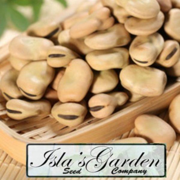 Isla's Garden Seeds Organic Seed 3 Fava Broad Windsor Seeds, 20 Premium Heirloom Seeds, Top selling popular choice, ON SALE!, (Isla's Garden Seeds), Non Gmo Organic Survival Seeds, Highest Quality!