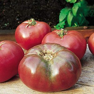 Burpee  1 Burpee Cherokee Purple' Heirloom Large Slicing Tomato Rich Flavor