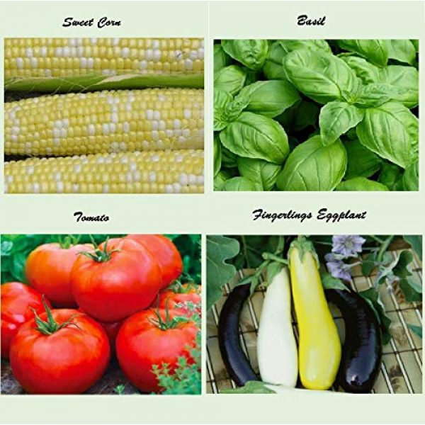 Apexmode Organic Seed 5 Set of 16 Assorted Organic Vegetable & Herb Seeds 16 Varieties Create a Deluxe Garden All Seeds are Heirloom, 100% Non-GMO Sweet Pepper Seeds, Hot Pepper Seeds-Red Onion Seeds- Green Onion Seeds