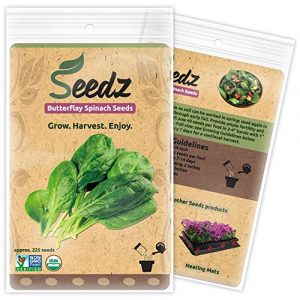 Seedz Organic Seed 1 Organic Spinach Seeds, APPR. 225, Butterflay Spinach, Heirloom Vegetable Seeds, Certified Organic, Non GMO, Non Hybrid, USA