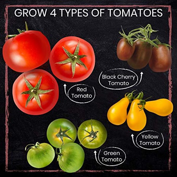 Nature's Blossom Organic Seed 2 Nature's Blossom Tomato Garden Kit. Grow 4 Types of Tomatoes from Seed. Gardening Starter Set For Growing Unusual Tomatoes; Sweet Red Tomato, Black Cherry, Yellow Pear Tomato and Green Zebra Tomatoes.