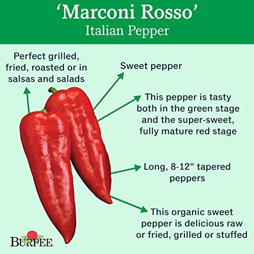 Burpee  2 Burpee Marconi Rosso (Organic) Sweet Pepper Seeds 20 seeds