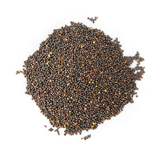 Microgreens & Planting Outdoors | Non GMO Heirloom Seeds | Bulk 1 LB Resealable Bag