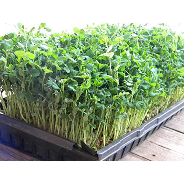 Country Creek Seeds Organic Seed 4 Green Pea Sprouting Seed, Organic, Non GMO - 6 oz - Country Creek Brand - Green Peas for Sprouts, Garden Planting, Cooking, Soup, Emergency Food Storage, Vegetable Gardening, Juicing, Cover Crop
