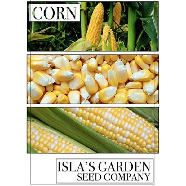 "Isla's Garden Seeds Heirloom Seed 4 ""Top Hat"" OP Sugary Enhanced Hybrid Yellow Corn Seeds, 25+ Premium Heirloom Seeds, Incredible flavor, Hot Price! (Isla's Garden Seeds), Non Gmo Seeds, 85% Germination, Highest Quality Seeds, 100% Pure"