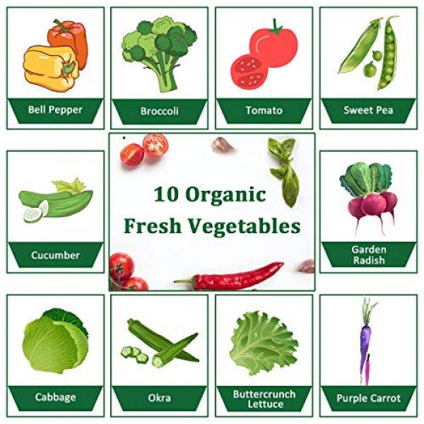 KORAM Organic Seed 3 Vegetable Seed Starter Kit, KORAM 10 Organic Garden Vegetable Seeds for Indoor Planting, Pots Kitchen Gardening Grow Kits Gift for Gardening Beginner