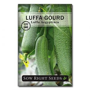 Sow Right Seeds Heirloom Seed 1 Sow Right Seeds - Luffa Gourd Seed for Planting - Non-GMO Heirloom Packet with Instructions to Plant a Home Vegetable Garden - Great Gardening Gift (1)
