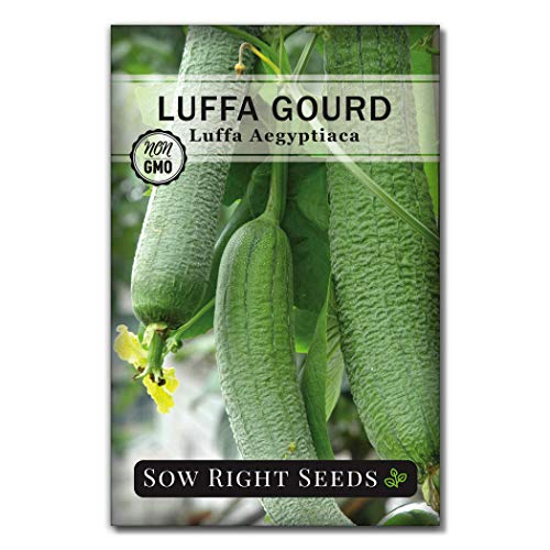 Sow Right Seeds  1 Sow Right Seeds - Luffa Gourd Seed for Planting - Non-GMO Heirloom Packet with Instructions to Plant a Home Vegetable Garden - Great Gardening Gift (1)