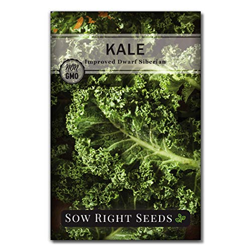 Sow Right Seeds  1 Sow Right Seeds - Dwarf Siberian Improved Kale Seed for Planting - Non-GMO Heirloom Packet with Instructions to Plant a Home Vegetable Garden