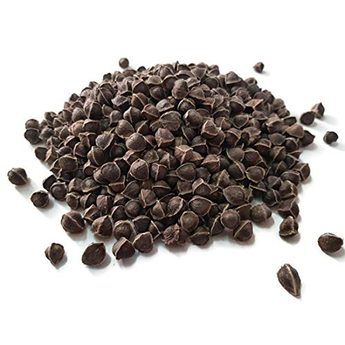YOGIS GIFT Celebrating health  3 Yogi's Gift - Moringa Organic Seeds Without Wings 2.20 lbs ~Approx 3500 Seeds | Fresh & Perfect Seeds for Eating | Indian Origin | Non-GMO | Semilla de Moringa | Wingless Moringa Seeds