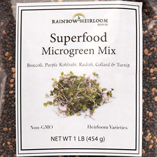 Rainbow Heirloom Seed Co. Heirloom Seed 2 Superfood Microgreen Seeds Mix | for Microgreens Growing Trays | 1 LB | Heirloom Non GMO Purple Kohlrabi, Collard, Radish, Turnip & Broccoli Sprouts Seeds | Rainbow Heirloom Seed Co.