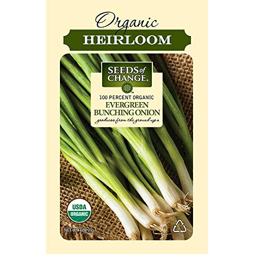 SEEDS OF CHANGE  1 Seeds Of Change 8225 Certified Evergreen Bunching Onion