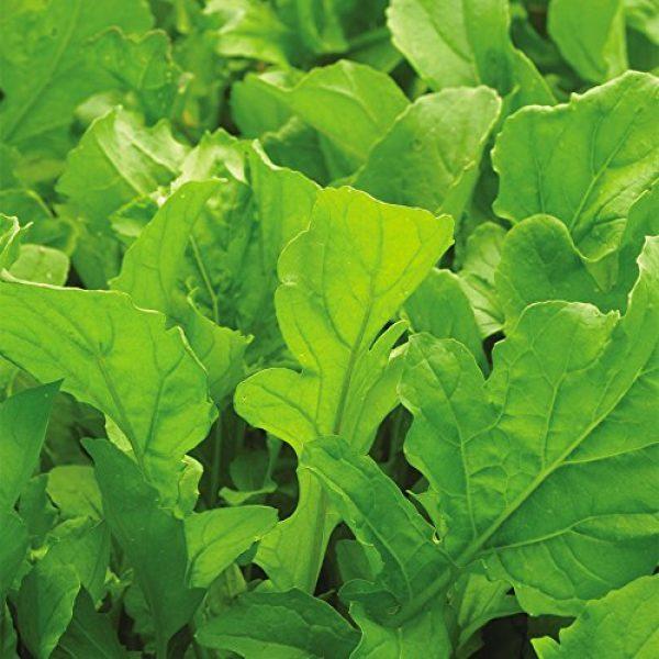 SEEDS OF CHANGE Organic Seed 4 Seeds of Change Certified Organic Arugula