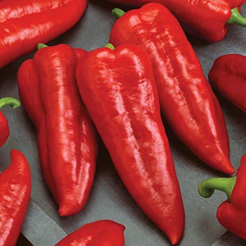 Burpee  1 Burpee Marconi Rosso (Organic) Sweet Pepper Seeds 20 seeds