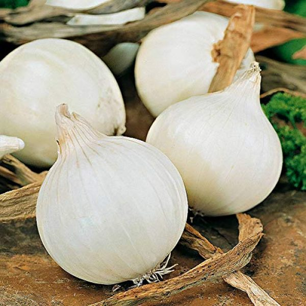 SeedsUA Heirloom Seed 2 Seeds Onion White Queen Giant Vegetable Heirloom Ukraine