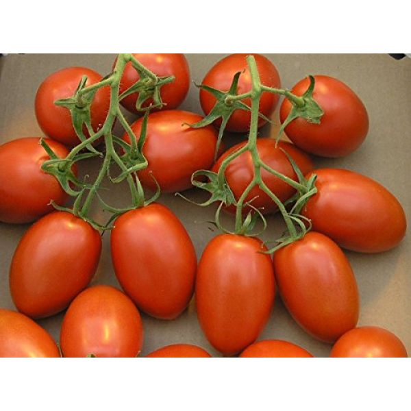 Isla's Garden Seeds Organic Seed 2 Organic Roma Tomato Seeds, 300+ Premium Heirloom Seeds!, 1 Selling Tomato Hot Pick & ON SALE!, (Isla's Garden Seeds), Non Gmo Organic, 85% Germination, Highest Quality Seeds, 100% Pure