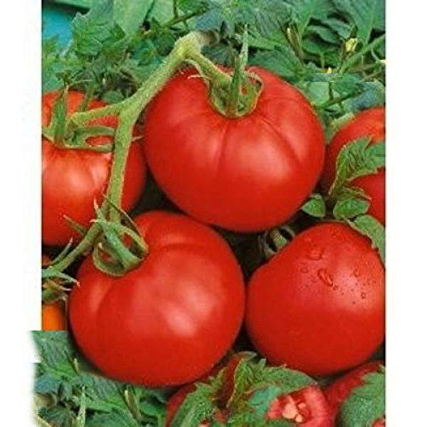 Isla's Garden Seeds Heirloom Seed 2 Ace 55 Heirloom Tomato Seeds, 150+ Premium Heirloom Seeds, Delicious Flavor! Top Seller, Lycopersicon esculentum, (Isla's Garden Seeds), Non GMO, 90% Germination, Highest Quality