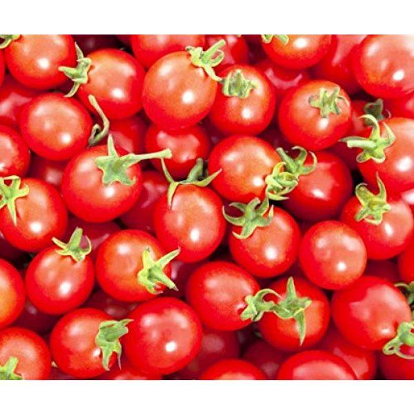 Isla's Garden Seeds Heirloom Seed 3 Sugar Lump Cherry Tomato, 200+ Premium Heirloom Seeds, Sweet Satisfying Flavor, (Isla's Garden Seeds), Non GMO, 90% Germination, Highest Quality 100% Pure