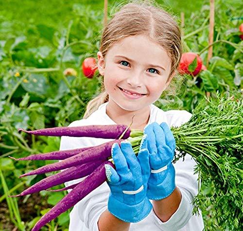 Nature's Blossom Organic Seed 6 Nature's Blossom Exotic Vegetable Garden Kit - Easily Grow 4 Funky Vegetables from Seeds. Educational STEM Gardening Gift Set for Kids, Men and Women. Full Beginners Starter Kit.