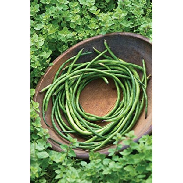 Burpee Heirloom Seed 4 Burpee Yardlong Asparagus Pole Bean Seeds 1 ounces of seed