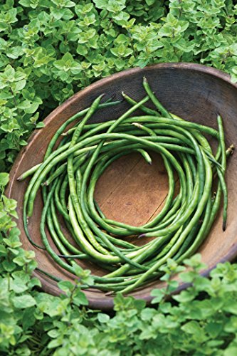 Burpee  4 Burpee Yardlong Asparagus Pole Bean Seeds 1 ounces of seed