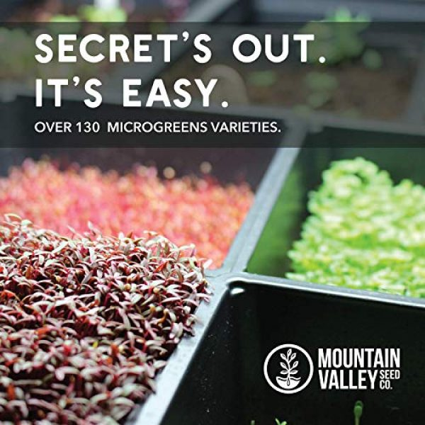 Mountain Valley Seed Company Heirloom Seed 7 Radish Sprouting Seed - Red Arrow Variety - 1 Lb Seed Pouch - Heirloom Radish Sprouts - Non-GMO Sprouting and Microgreens