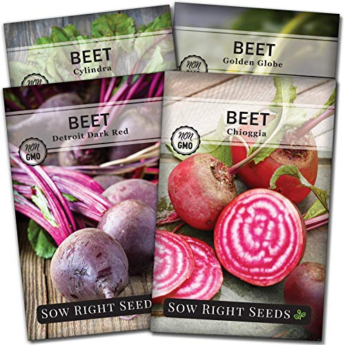 Sow Right Seeds  1 Sow Right Seeds - Beet Seed Collection for Planting - Detroit Dark Red