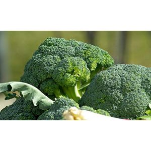 Isla's Garden Seeds Heirloom Seed 1 Broccoli Seeds (Waltham 29), 300+ Premium Heirloom Seeds, Fresh and Delicious! Must Have for Your Home Garden!, (Isla's Garden Seeds), Non GMO, 85% Germination Rates, Highest Quality Seed
