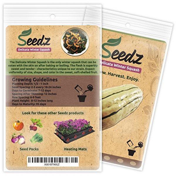 Seedz Organic Seed 3 Organic Squash Seeds, APPR. 25, Delicata Squash, Heirloom Vegetable Seeds, Certified Organic, Non GMO, Non Hybrid, USA