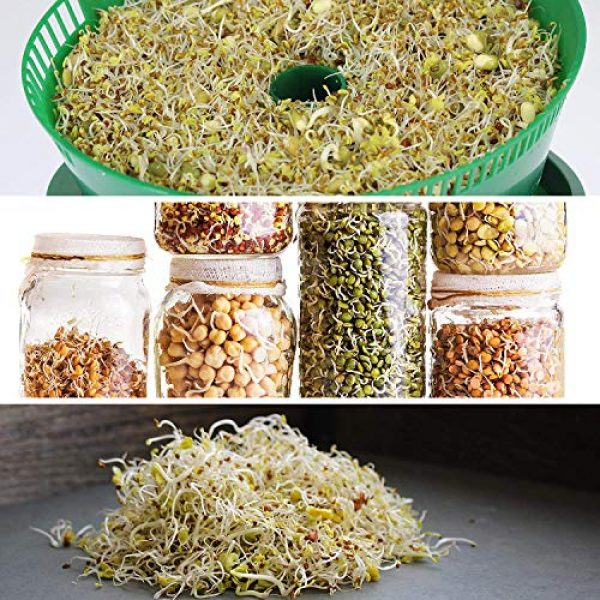 Handy Pantry Organic Seed 3 8 Oz - Handy Pantry 5 Part Salad Sprout Mix - Organic Non-GMO Mixed Seeds - Organic Broccoli Sprouting Seeds, Radish Sprout Seeds, Alfalfa Sprout Seeds, Lentil Seeds, and Mung Bean Seeds for Sprouting
