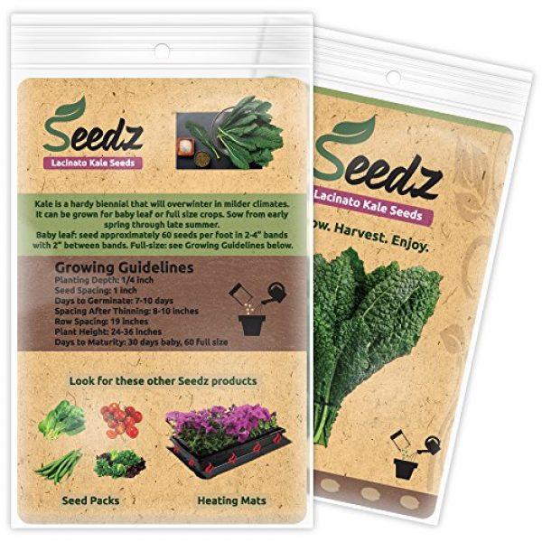 Seedz Organic Seed 3 Organic Kale Seeds, APPR. 550, Lacinato Kale, Heirloom Vegetable Seeds, Certified Organic, Non GMO, Non Hybrid, USA