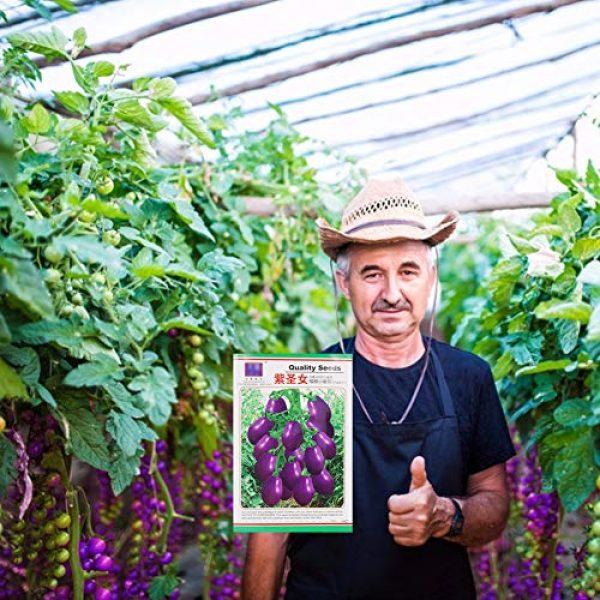 Mistyrain Organic Seed 5 Tomato Seeds Vegetables Seeds Purple Tomato Seeds Bonsai Vegetables Delicious Tasty Organic Seeds Tomato Plants Seeds for Planting Home Garden Yard Fruits Vegetables Bonsai Balcony Farm Indoor Outdoor