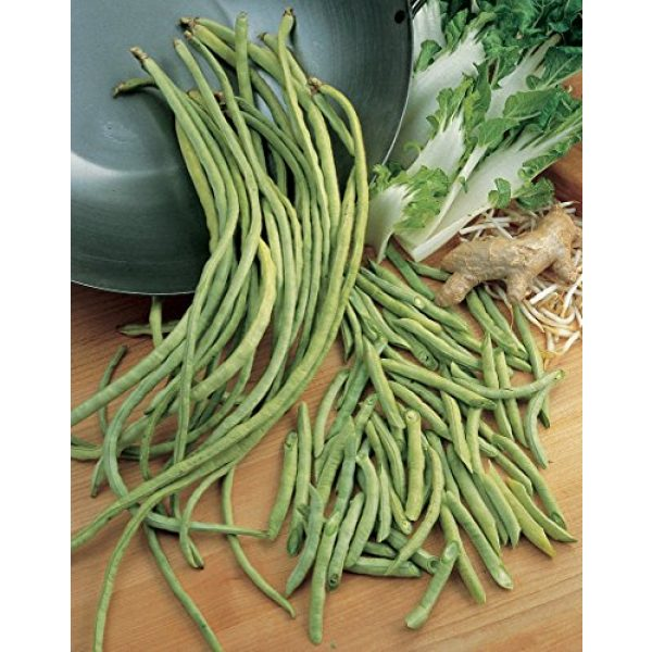 Burpee Heirloom Seed 2 Burpee Yardlong Asparagus Pole Bean Seeds 1 ounces of seed