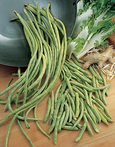 Burpee  2 Burpee Yardlong Asparagus Pole Bean Seeds 1 ounces of seed