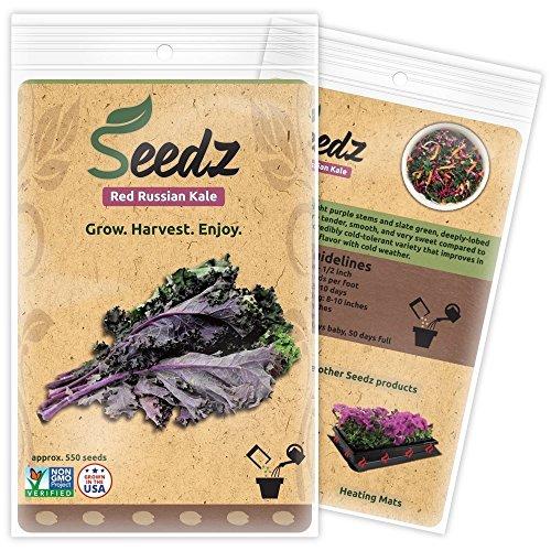 Seedz  1 Organic Kale Seeds (APPR. 550) Red Russian Kale - Heirloom Vegetable Seeds - Certified Organic