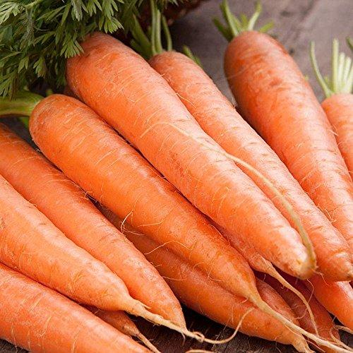 Isla's Garden Seeds  1 Scarlet Nantes Carrot Seeds