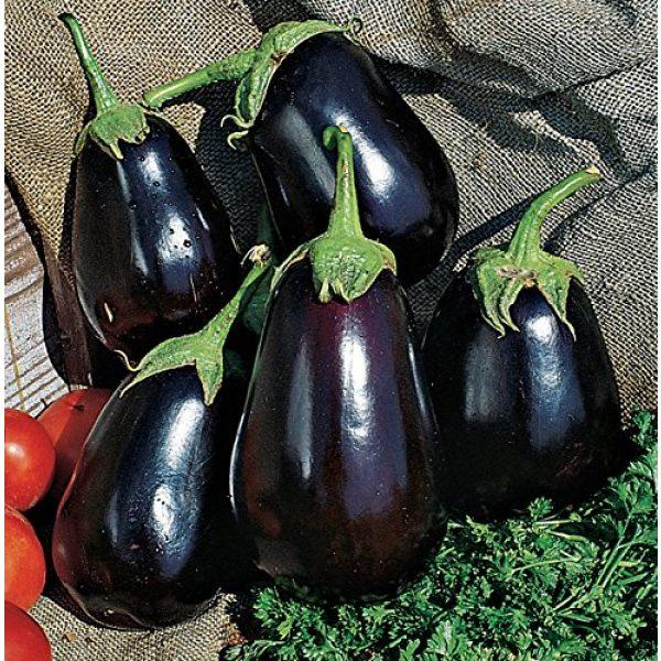 Burpee Heirloom Seed 3 Burpee Black Beauty Eggplant Seeds 100 seeds