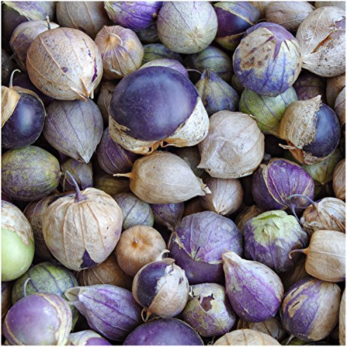 Purple Milpa Tomatillo (Physalis ixocarpa) Twin Pack of 50 Seeds Each Non-GMO