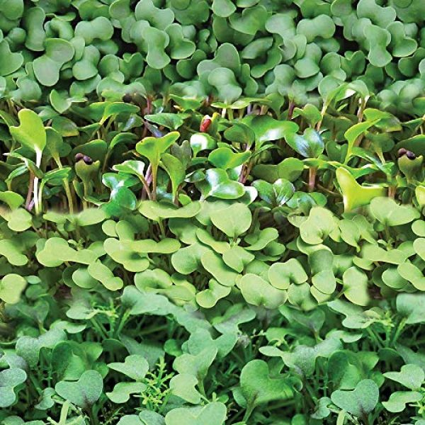 SEEDS OF CHANGE Organic Seed 4 Seeds Of Change 8215 Certified Mild Mix Microgreens, Organic, Seeds, Green