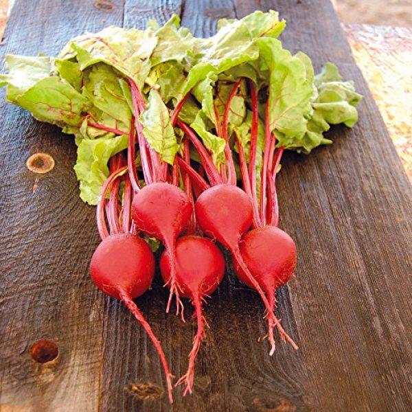 Seedz Organic Seed 2 Organic Beet Seeds, APPR. 225, Early Wonder Tall Top Beet, Heirloom Vegetable Seeds, Certified Organic, Non GMO, Non Hybrid, USA