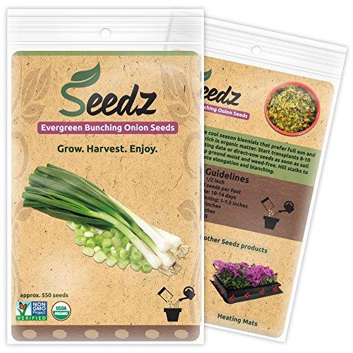 Seedz  1 Organic Onion Seeds