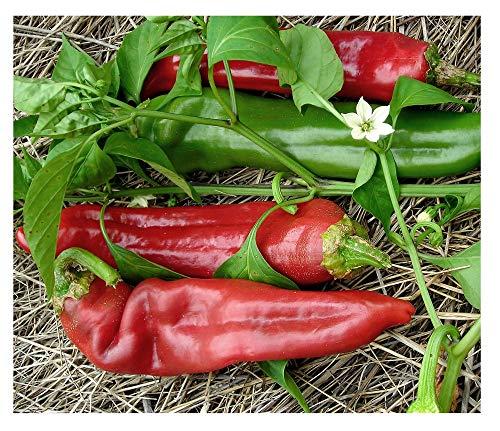 David's Garden Seeds  1 David's Garden Seeds Pepper Hot Big Jim SL1323 (Red) 50 Non-GMO