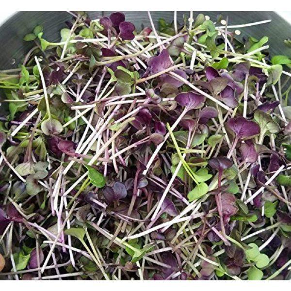 Isla's Garden Seeds Heirloom Seed 2 Microgreens Rambo Radish Seeds, Fantastic Addition to Salads! 200+ Premium Heirloom Seeds, Perfect for Your Home Garden!,(Isla's Garden Seeds), Non GMO, 90% Germination,