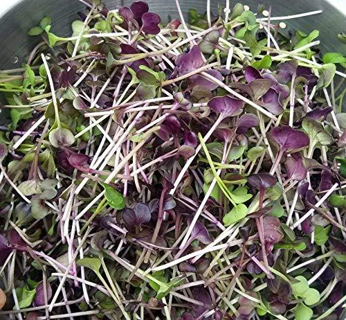Fantastic Addition to Salads! 200+ Premium Heirloom Seeds