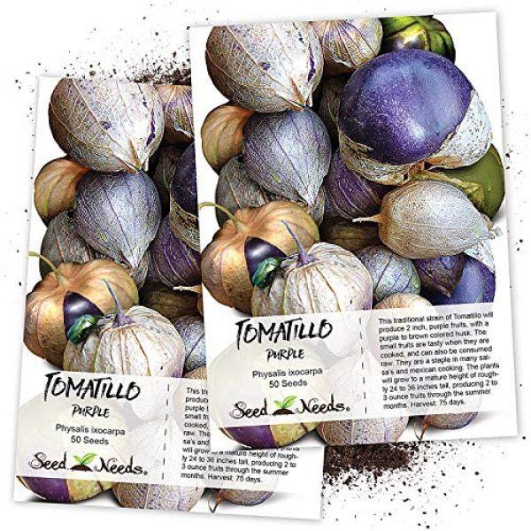 Seed Needs Heirloom Seed 1 Seed Needs, Purple Milpa Tomatillo (Physalis ixocarpa) Twin Pack of 50 Seeds Each Non-GMO