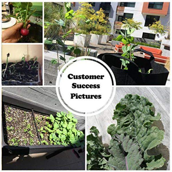 Sustainable Seed Company Heirloom Seed 6 22,000 Non GMO Heirloom Vegetable Seeds, Survival Garden, Emergency Seed Vault, 34 VAR, Bug Out Bag - Beet, Broccoli, Carrot, Corn, Basil, Pumpkin, Radish, Tomato, More