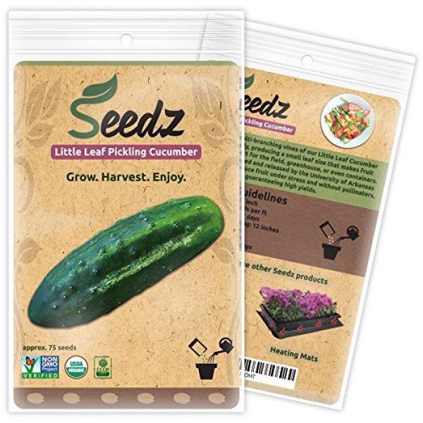 Seedz Organic Seed 1 Organic Cucumber Seeds (APPR. 75) Little Leaf Pickling Cucumber - Heirloom Vegetable Seeds - Certified Organic, Non-GMO, Non Hybrid - USA